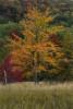 Acadia_National_Park_2013_2014_104