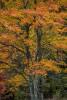 Acadia_National_Park_2013_2014_105