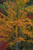 Acadia_National_Park_2013_2014_106