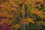 Acadia_National_Park_2013_2014_107