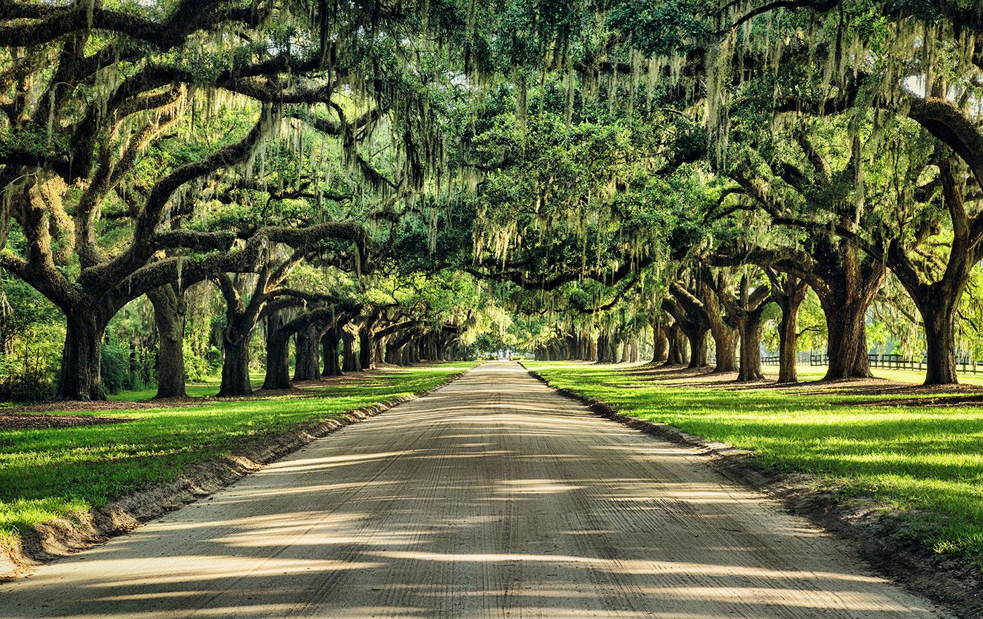 Boone_plantation_amaazing