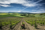 The beautiful vineyards of Tuscany