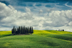 The Cypress Grove of Tuscany