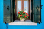 The geraniums of Burano