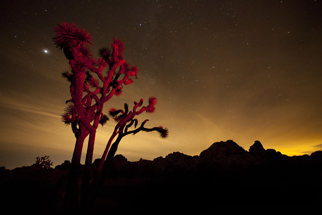 after dark in joshua tree national park