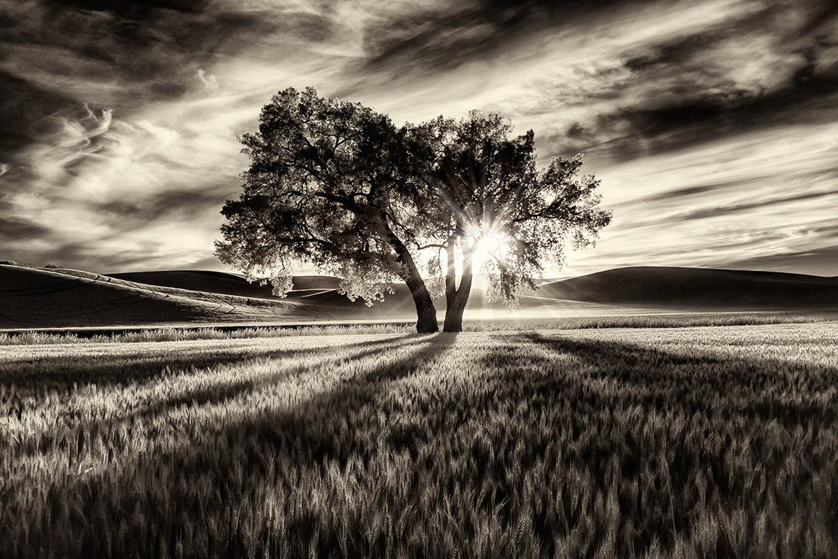 My favorite lone tree