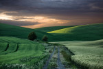 Palouse_best_photos_031