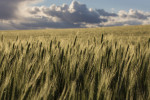Palouse_best_photos_038