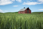 Palouse_best_photos_112