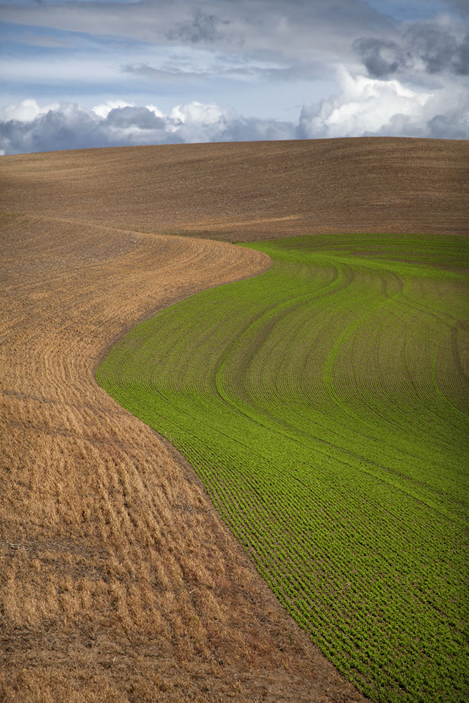 Palouse_best_photos_137