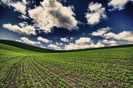 Palouse_best_photos_141