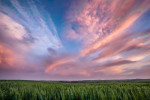 Palouse_best_photos_146