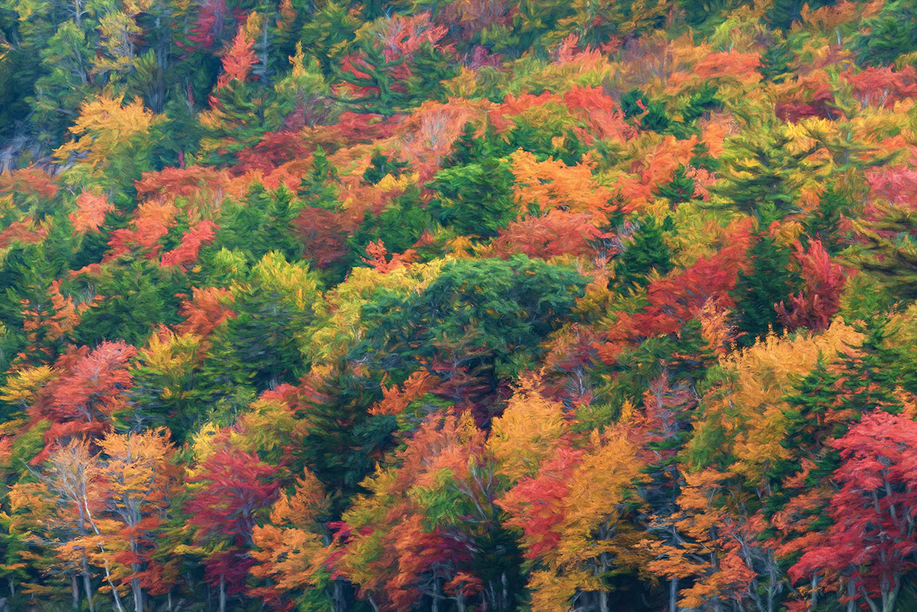 Fall color above Jordan Pond