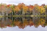 Fall color & reflections outside of Bar Harbor