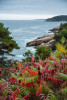 acadia_national_park_bar_harbor_11