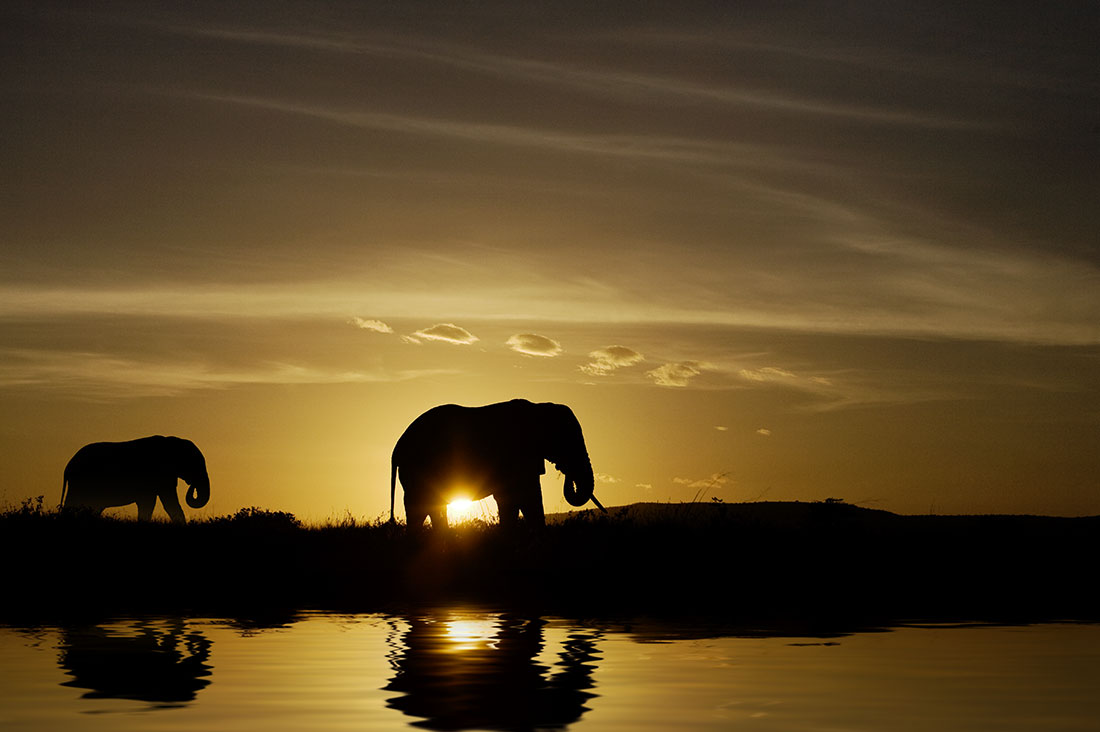 Mother Elephant and baby at sunrise