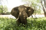 africa035