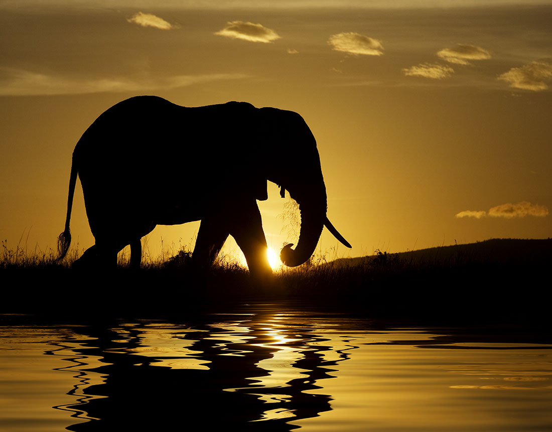 Lone Elephant at sunrise