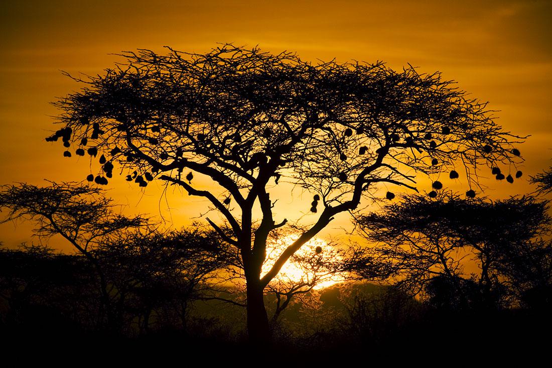 africa118