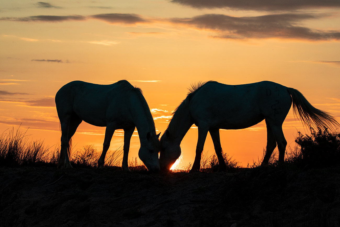 Sunrise in the Camargue, France