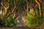 The incredible Dark Hedges in Northern Ireland