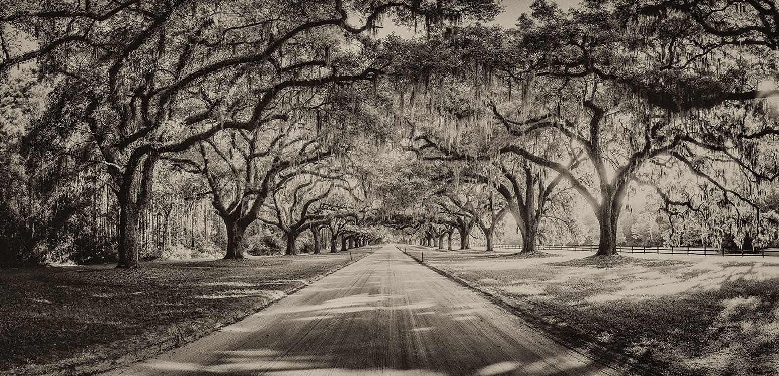 The driveway to Boone Plantation, SC.