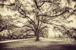 boone_plantation_sepia