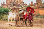 Young monks in an oxcart in Bagan, Burma