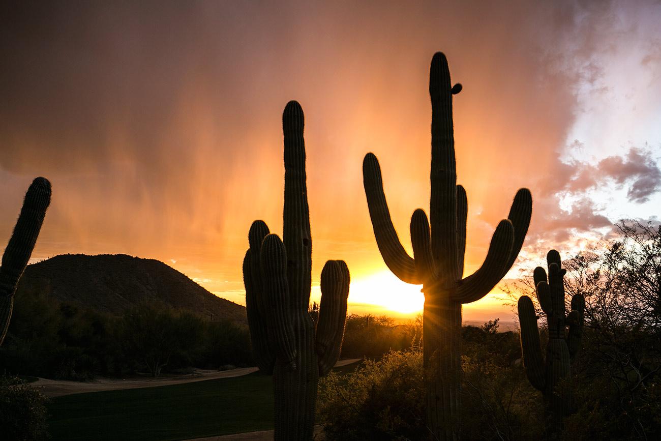 cactus_scottsdale