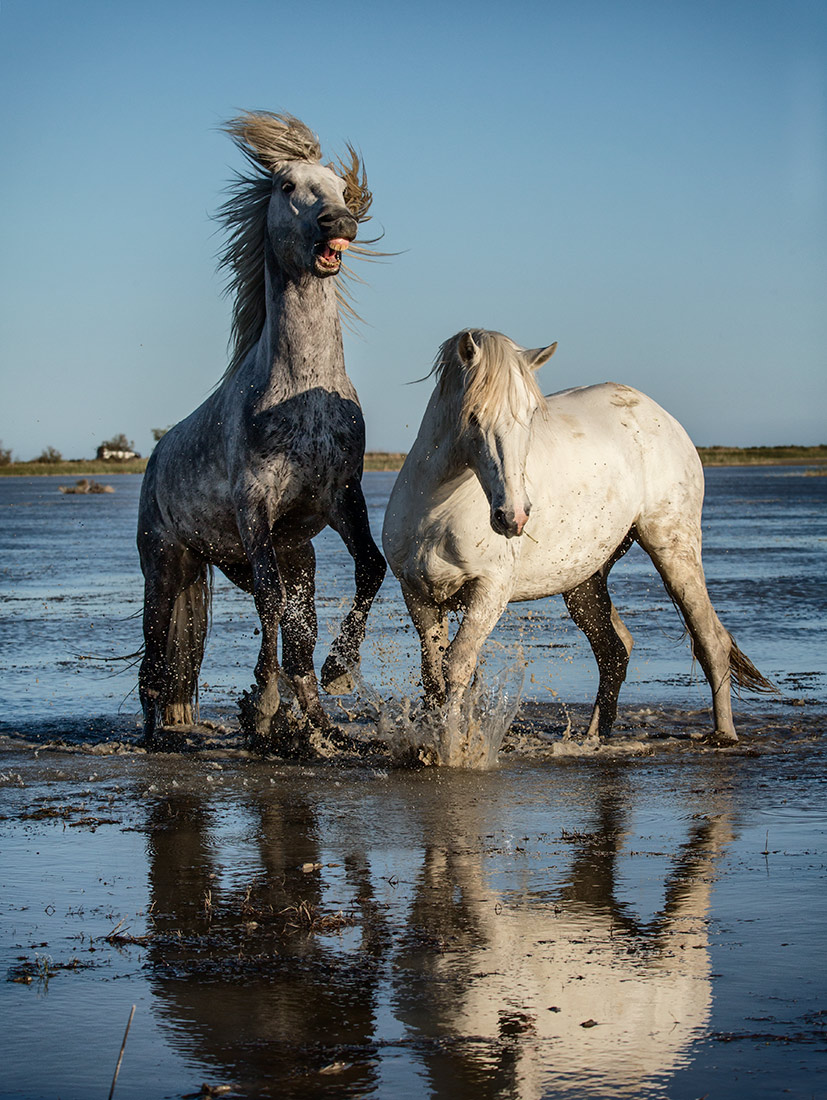 camargue-workshop_2017_55