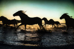 camargue_cool_beach