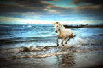 camargue_cool_impression
