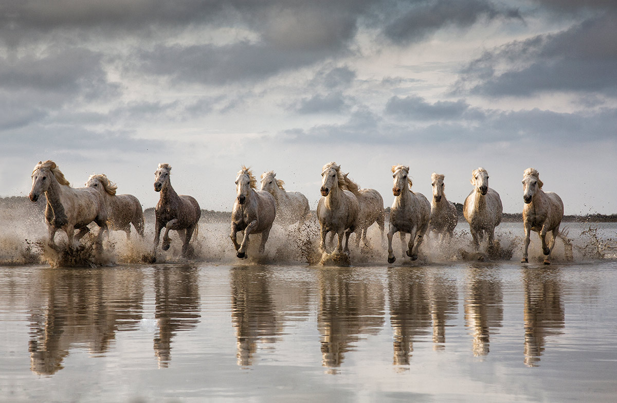 The White horses of the Camargue Workshop