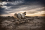 camargue_horse_workshop_2014_005