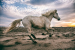 camargue_horse_workshop_2014_006