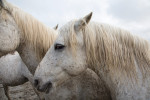 camargue_horse_workshop_2014_007
