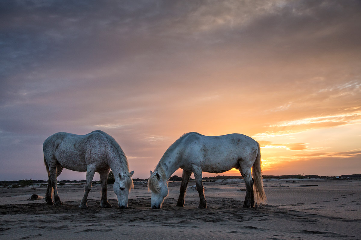 camargue_horse_workshop_2014_014