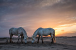 camargue_horse_workshop_2014_014
