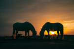 camargue_horse_workshop_2014_015