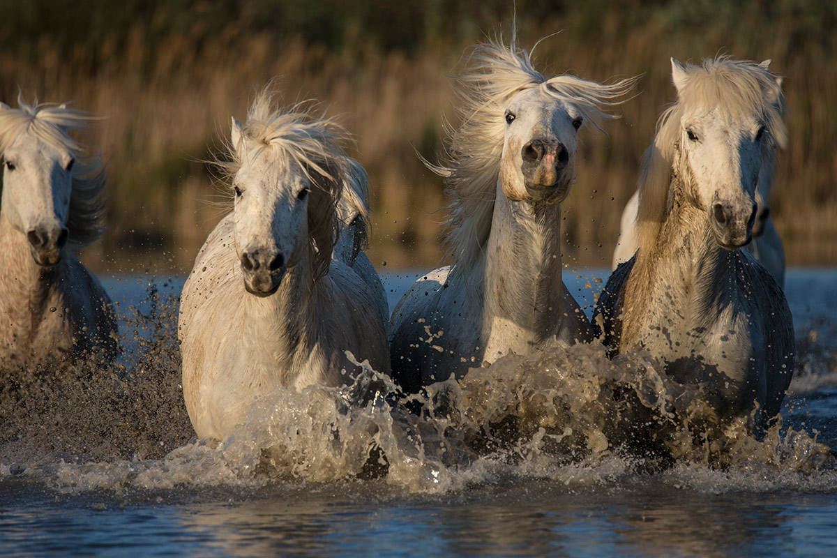 camargue_horse_workshop_2014_016