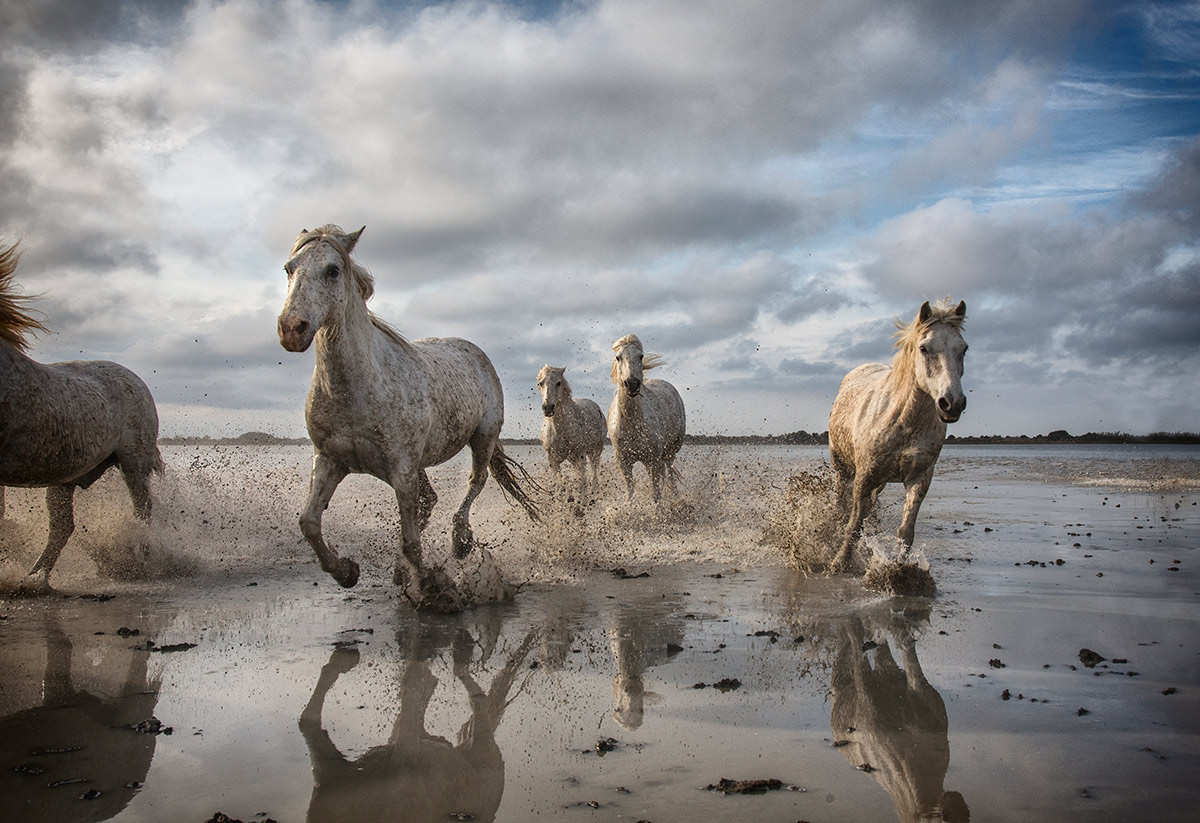 camargue_horse_workshop_2014_017