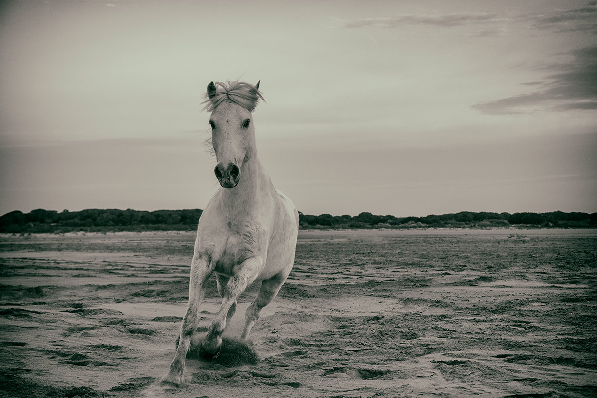 camargue_horse_workshop_2014_019