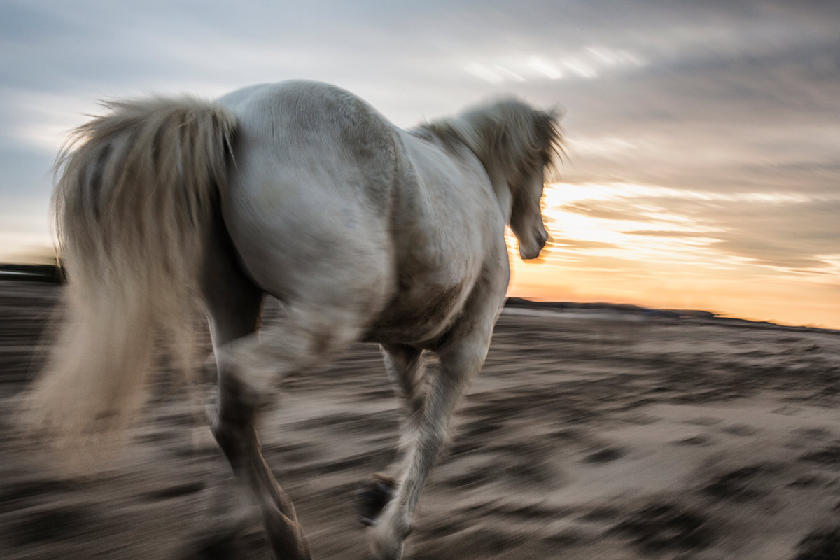 camargue_horse_workshop_2014_020