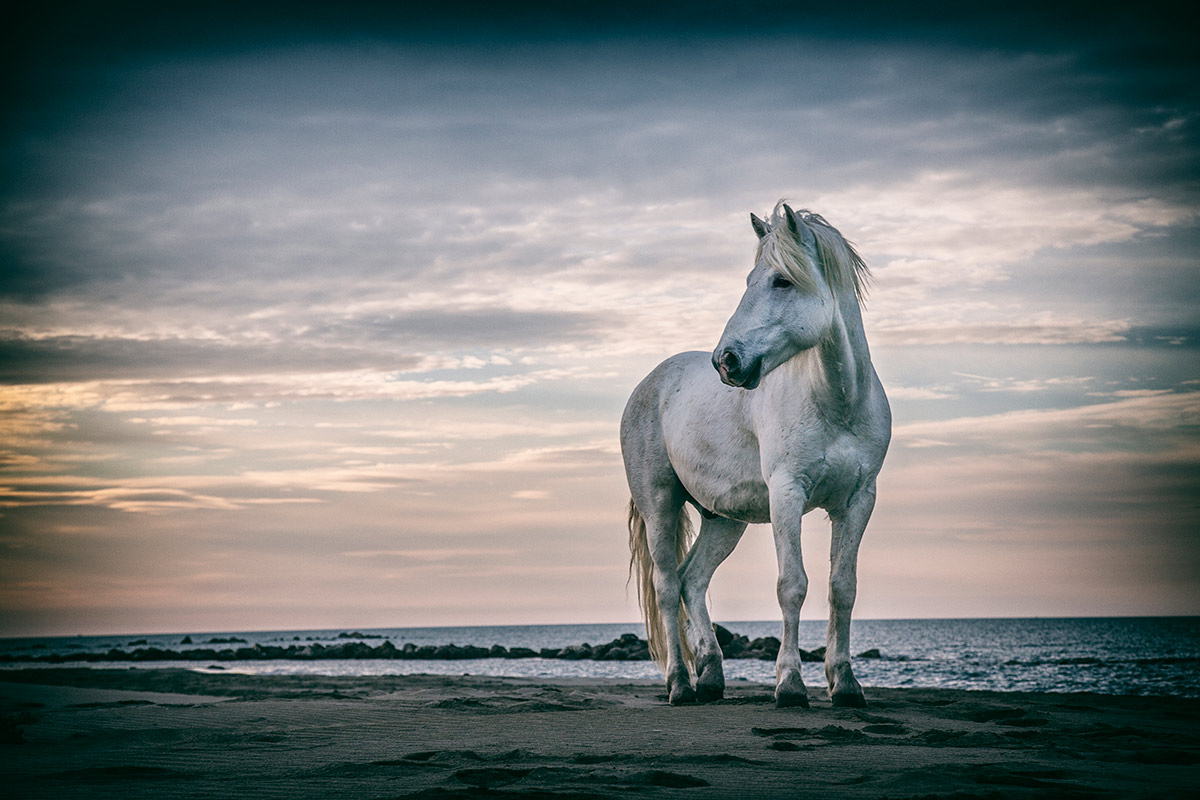 camargue_horse_workshop_2014_021