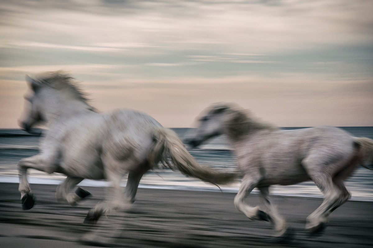 camargue_horse_workshop_2014_022