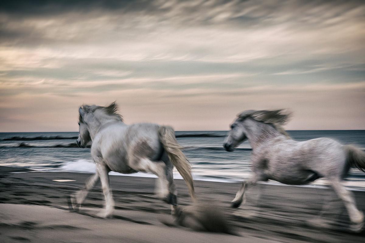 camargue_horse_workshop_2014_023