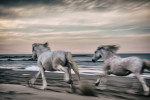 camargue_horse_workshop_2014_023