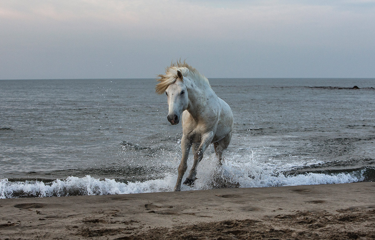 camargue_horse_workshop_2014_024