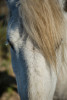 camargue_horse_workshop_2014_030