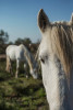 camargue_horse_workshop_2014_031